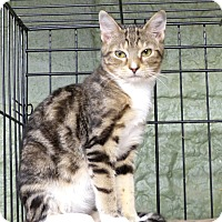 Adopt A Pet :: Gidget - Marlinton, WV