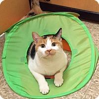 Adopt A Pet :: Kitty K - Scottsdale, AZ