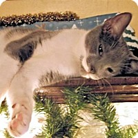 Adopt A Pet :: Haven - Rocky Hill, CT
