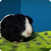 Adopt A Pet :: Hilda - Coral Springs, FL