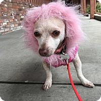 Adopt A Pet :: Lola - Santa Clara, CA