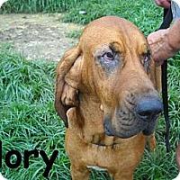 Adopt A Pet :: Glory - Albany, NY