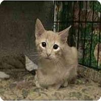 Adopt A Pet :: Brisco - The Colony, TX