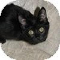 Adopt A Pet :: Songbird - Vancouver, BC