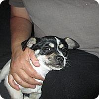 Adopt A Pet :: Stuie - Apex, NC