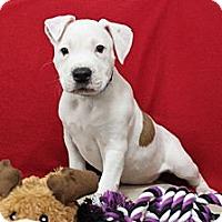 Adopt A Pet :: Hershey - Loxahatchee, FL