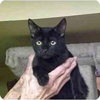 Adopt A Pet :: Bones - Lombard, IL