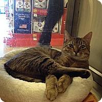 Adopt A Pet :: Beasty - East Hanover, NJ