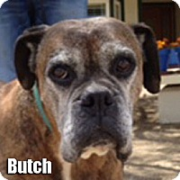 Adopt A Pet :: Butch - Encino, CA