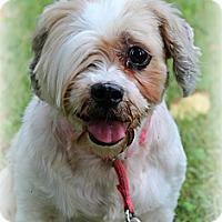 Adopt A Pet :: Beeja - Sinking Spring, PA