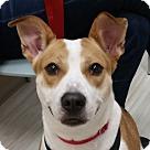 Adopt A Pet :: Kyra
