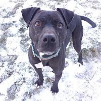 Adopt A Pet :: Lola - Lake Odessa, MI