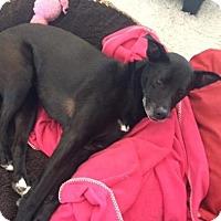 Adopt A Pet :: Java - Saskatoon, SK