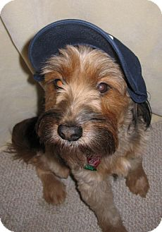 Terrier (Unknown Type, Medium) Mix Dog for adoption in Brookfield, Wisconsin - Foster Homes?
