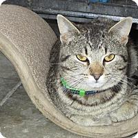 Adopt A Pet :: Gidget - Glenpool, OK