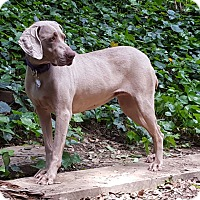 Adopt A Pet :: BUDDY GIRL - Corte Madera, CA