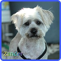 Adopt A Pet :: Zander - Hollywood, FL