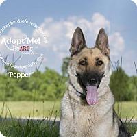 Adopt A Pet :: Pepper - Montgomery, AL