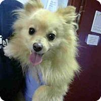 Adopt A Pet :: CARTER - Atlanta, GA
