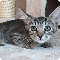 Adopt A Pet :: Mystic - San Bernardino, CA
