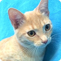 Adopt A Pet :: Violet - Colorado Springs, CO