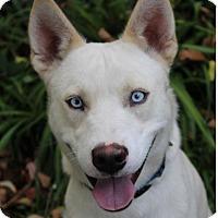 Adopt A Pet :: CASPER - Red Bluff, CA