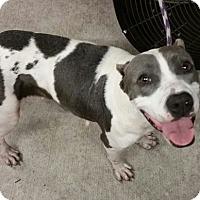 Adopt A Pet :: Smokey - Gainesville, FL