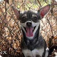 Adopt A Pet :: Jinx - Texarkana, AR