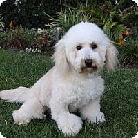 Adopt A Pet :: JJ - Newport Beach, CA