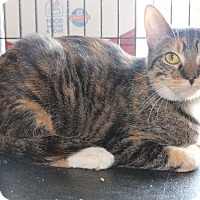 Adopt A Pet :: Linkin - New Orleans, LA