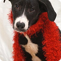 Adopt A Pet :: Portland - Newnan City, GA