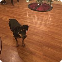 Adopt A Pet :: Nina - Fort Worth, TX