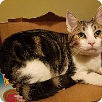 Adopt A Pet :: Sarah - Newport, KY