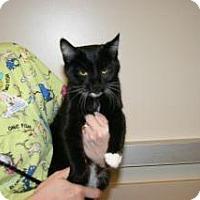 Adopt A Pet :: 327625 - Wildomar, CA