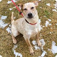 Adopt A Pet :: Annie - Lafayette, NJ