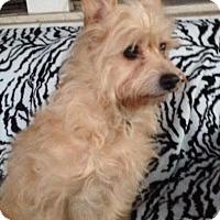 Adopt A Pet :: KK - Memphis, TN