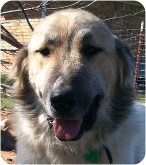Shepherd Mix Dog for adoption in Oklahoma City, Oklahoma - Joey