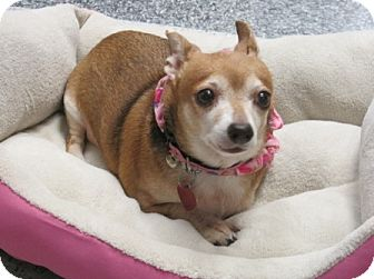 Lisa S Small Dog Rescue