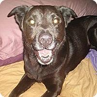 Adopt A Pet :: Nadia - North Jackson, OH