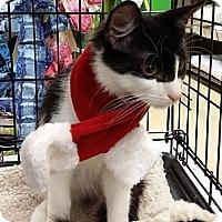 Adopt A Pet :: Radar & Bandit - Island Park, NY