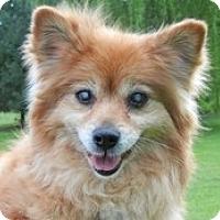 Adopt A Pet :: Elara - Seymour, CT