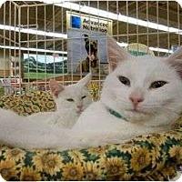 Adopt A Pet :: Snowman & Snowflake - Chesapeake, VA