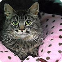 Adopt A Pet :: Dierdra - Lunenburg, MA