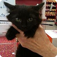 Adopt A Pet :: Orbitor - Sterling Hgts, MI