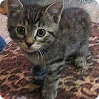 Adopt A Pet :: Biloxi - Portland, OR