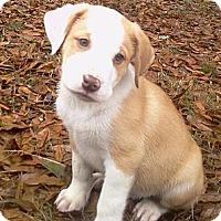 Adopt A Pet :: Jester - Albany, NY