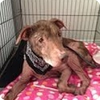 Adopt A Pet :: ERNEST - Valley Village, CA