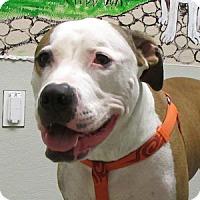 Adopt A Pet :: Elroy - Gilbert, AZ