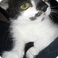 Adopt A Pet :: Piper - Chandler, AZ