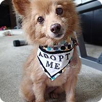 Adopt A Pet :: Walnut - conroe, TX